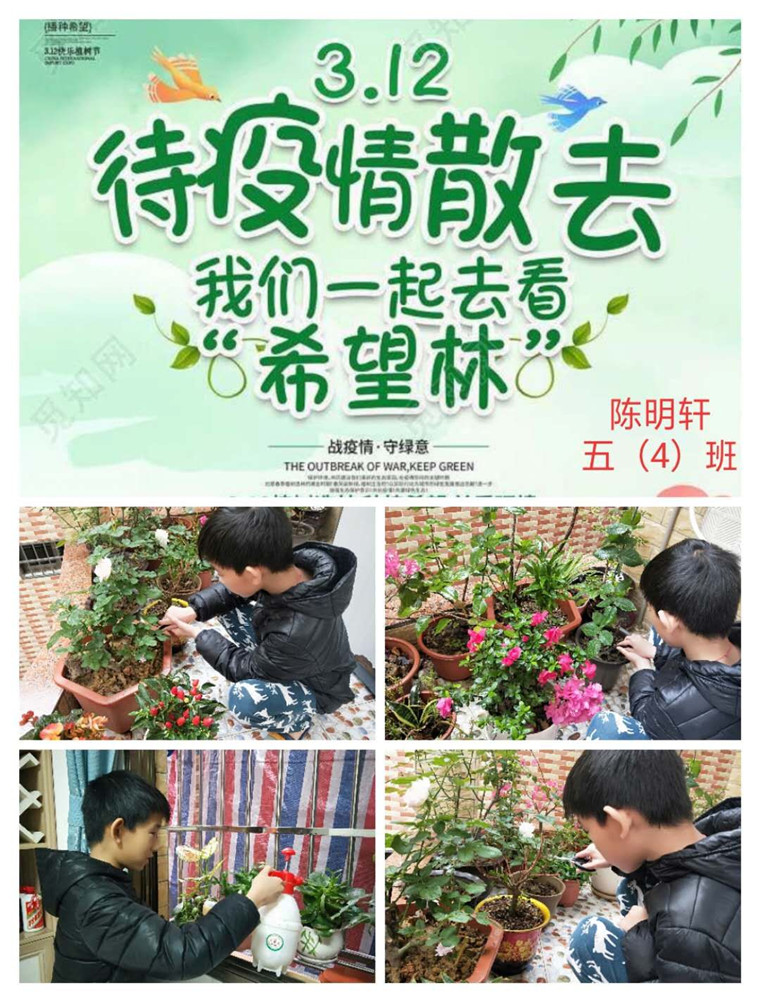 """""""播种绿色,放飞希望""""鼎湖区各中小学校 植树节教育活动"""